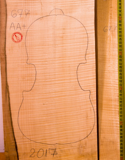 Violin No.677 One piece Back and Side