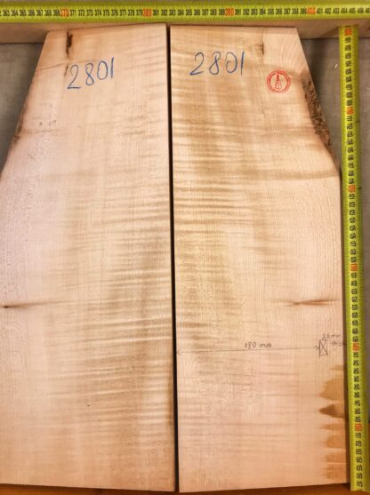 electric guitar maple