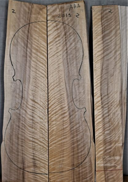 cello poplar